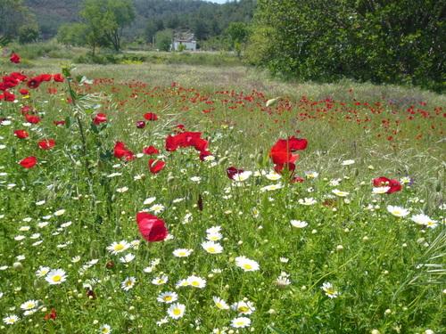 Poppy Fields Incirkoy Fethiye